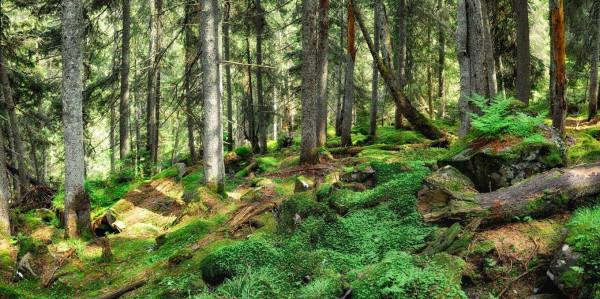 Рада наполягає на інвентаризації лісів України