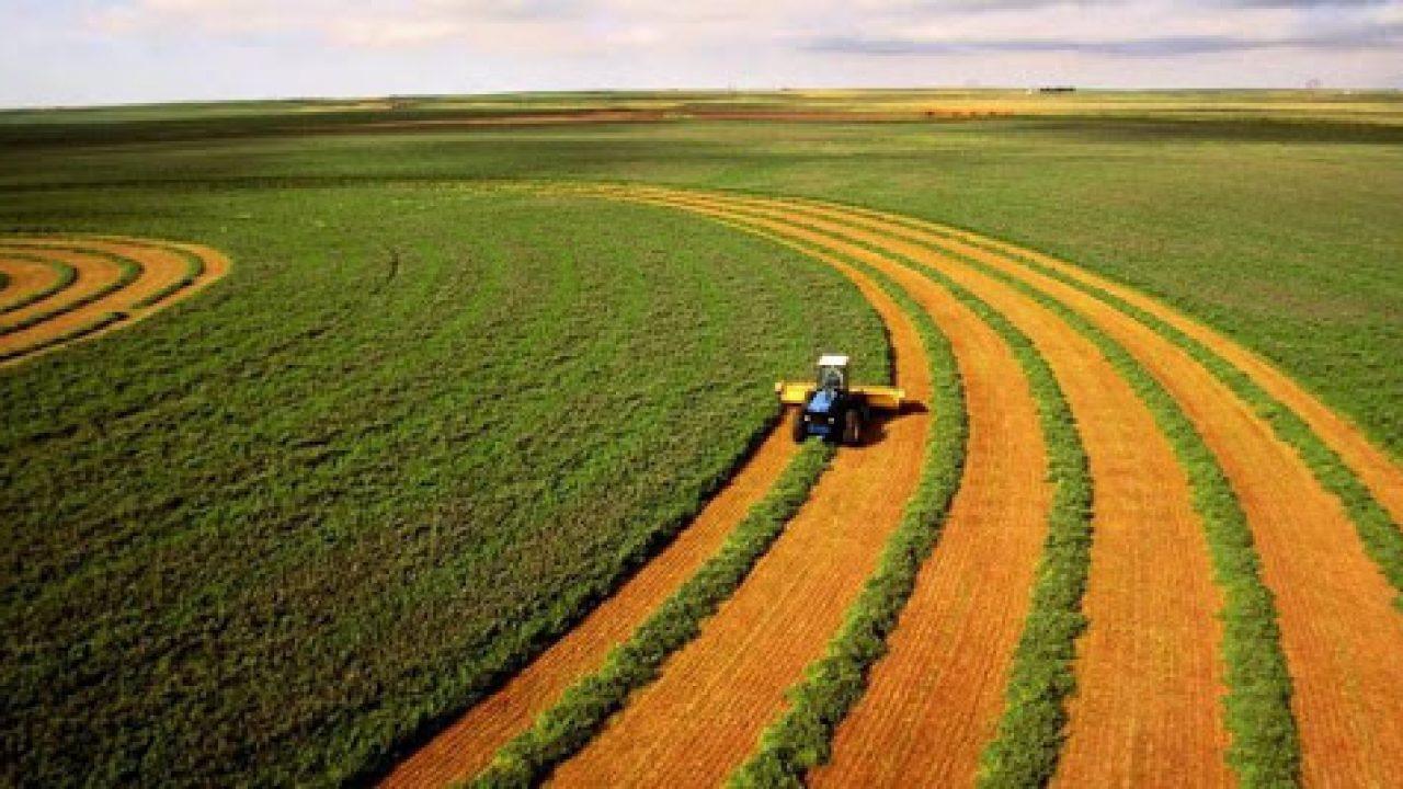 Хто та як зможе купувати землю в Україні: Мін'юст