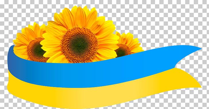 common-sunflower-Подсолнух-flag-of-ukraine-others
